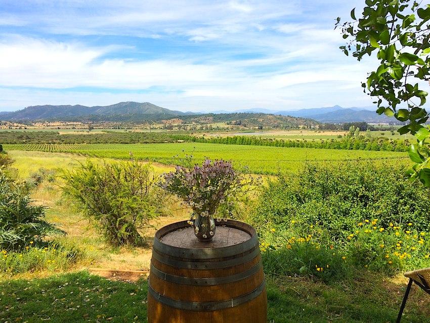 Especial MOVI – Alguns ótimos vinhos tintos que provei na degustação para imprensa