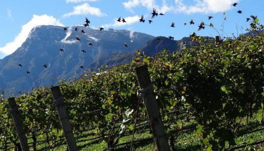 3 vinhos italianos para ficar na memória